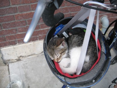 Helmet kitty.jpg