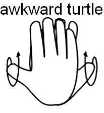 awkward-turtle.jpg