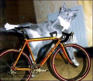 cat-on-bicycle.jpg