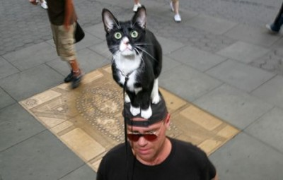 cat-on-head-3_19347_600x450.jpg