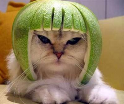 helmetcat.jpg