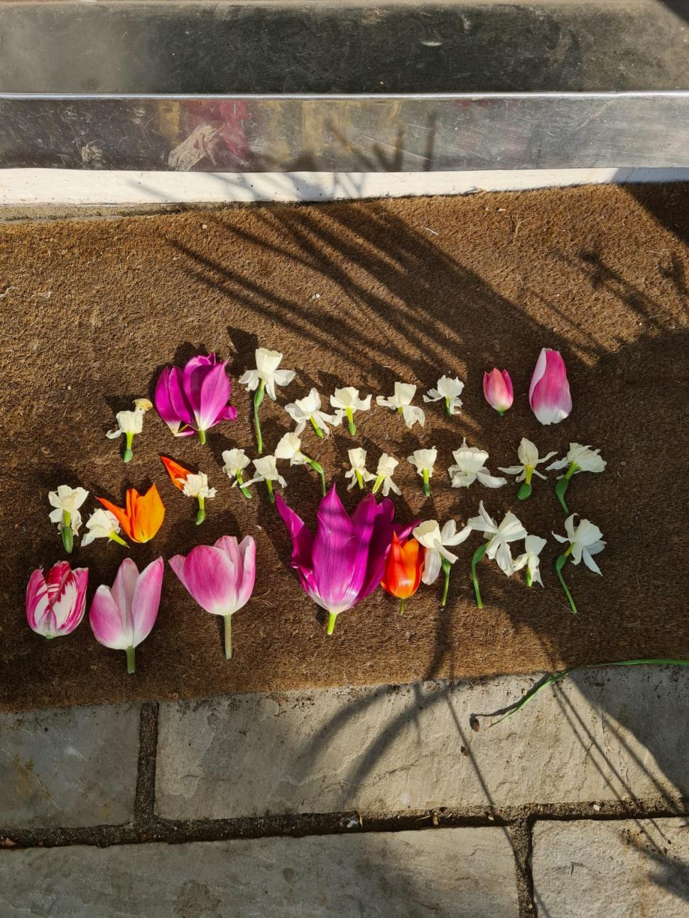 Safe cycling campaigner has her flowers 'decapitated'