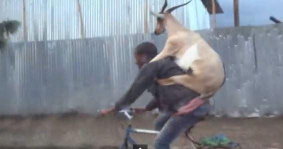 Goat backie YouTube still