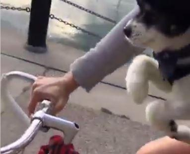 Pedalling pup (via Tanya Reid on Facebook).JPG