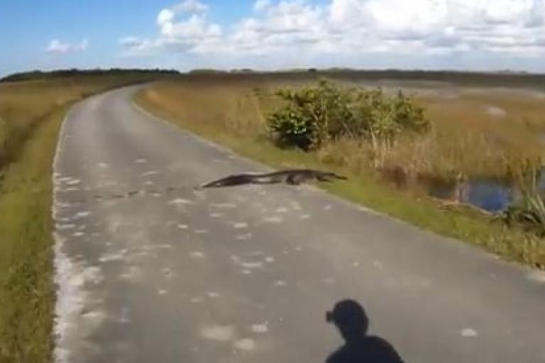 Cyclist mistakes alligator for a log YouTube still.JPG