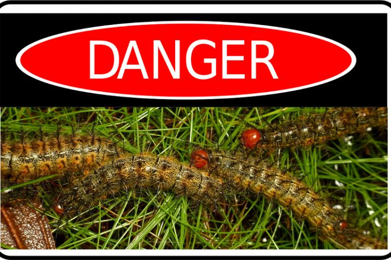 Danger_caterpillars_(CC_Andreas_Kay-Flickr).png