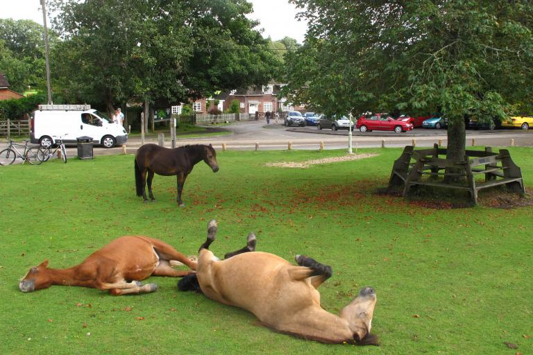 New Forest ponies react to NFNPA's new proposals (CC BY-NC 2.0 licensed by duncan c:Flickr)