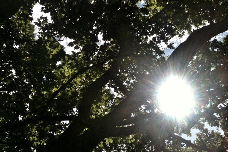 Tree_(copyright_Simon_MacMichael)