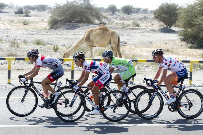 2013 Tour of Oman Stage 3 break passing camel (© Lloyd Images:Muscat Muncipality)