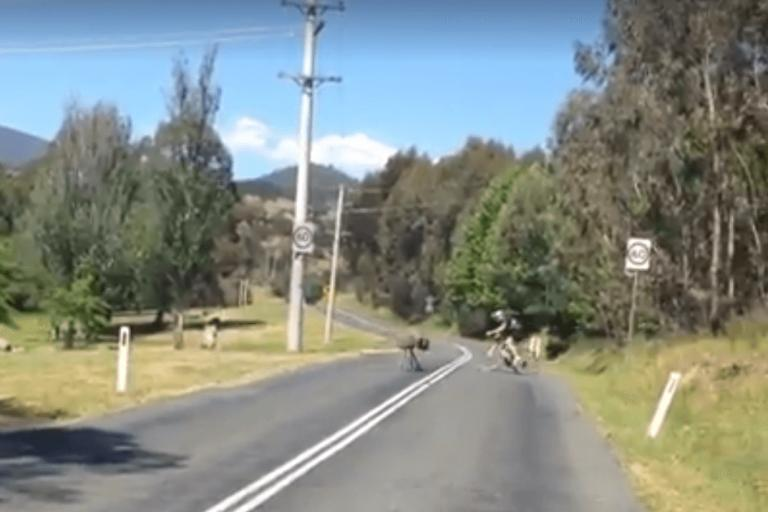 Emu chase (still from video by Chris Wilson)